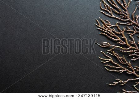 Floral Dark Background With Painted Coral Branch