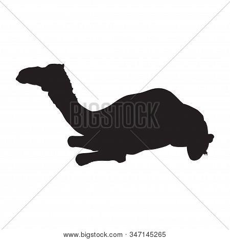 Arabian One-humped Camel Dromedary Silhouette, Vector Illustration.