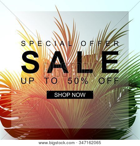 Summer Sale Banner With Palm Leaf. Special Offer. Sale Up To 50 Off. Nature Background With Sunshine