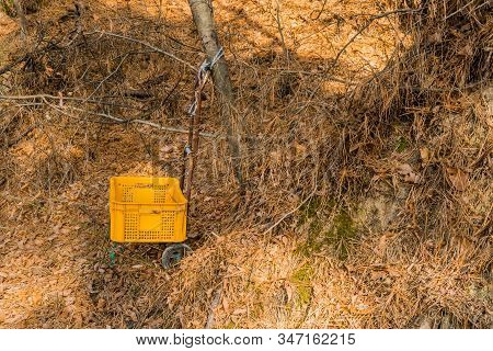 Small Plastic Crate On Luggage Hand Trolly Tied To Tree In Wilderness Area.