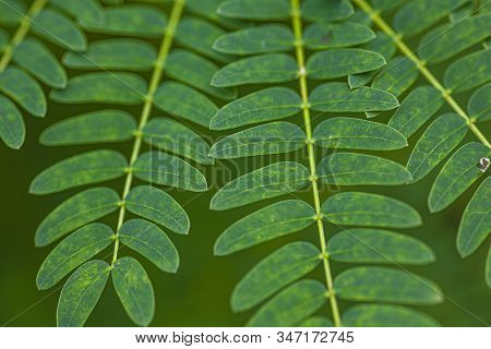 Detail Of Fern Leaves Shot With Macro Lens 8