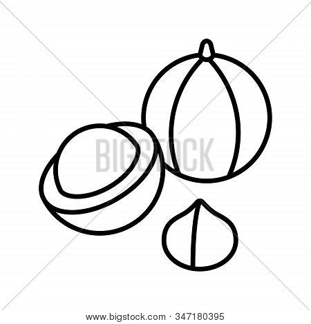 Macadamia Nut Icon. Outline Macadamia Vector Icon For Web Design And Apps Isolated On White Backgrou
