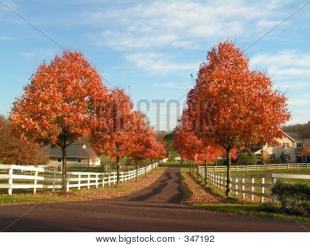 Country Road