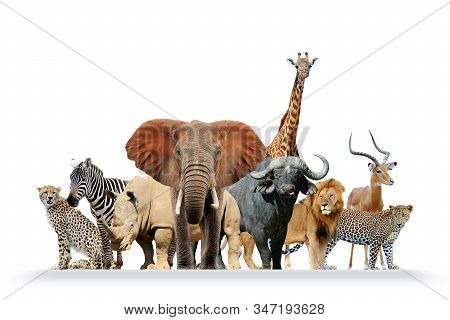 Group Of African Safari Animals Together Isolated On White Background