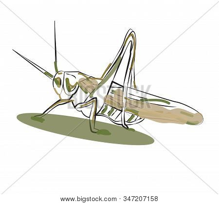 Cricket. Insect Concept. Vector Illustration. Green Color