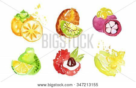Juicy Ripe Tropical Fruit Collection, Persimmon, Mangosteen, Kiwi, Pomelo, Lychee, Carambola Waterco