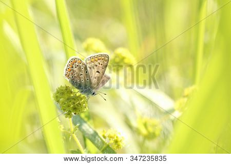 Blue Butterfly spring morning. Nature background Butterfly green grass meadow Nature background Macro Close-up Nature background summer Nature background sun sunshine Nature background Natural environment Nature background Butterflies Nature background.