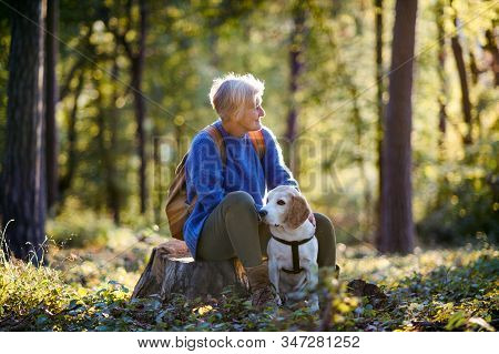 A Senior Woman With Dog On A Walk Outdoors In Forest, Resting.