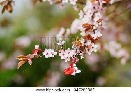 Branch Of Blossoming Cherry Tree With Red And White Martisor - Traditional Symbol Of The First Sprin