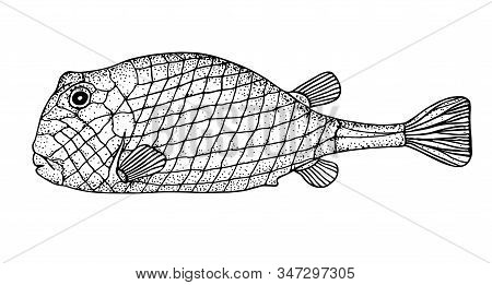 Bony Fish. Black Hand Drawn Realistic Outline Vector Image.