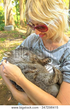 Woman Holding A Cute Wombat Sleeping In Marsupial Position, Vombatus Ursinus. Encounter With Austral