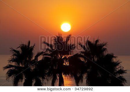 Sunset Over Palms