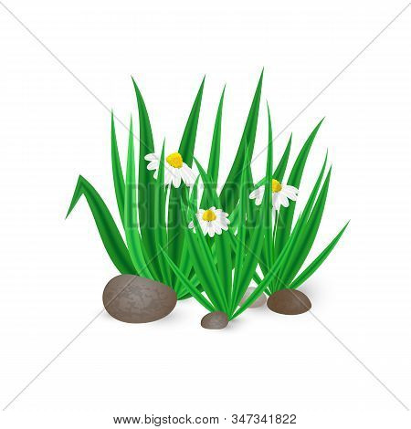 Vector Illustration Of Realistic Spring Green Grass With Blooming Bellis Flowers And Stones Isolated