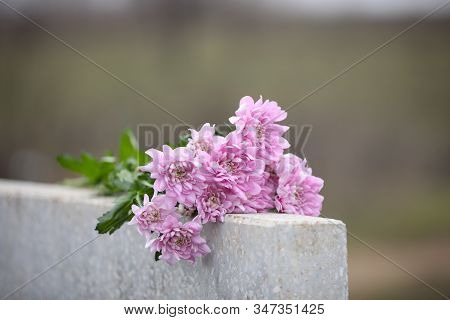 Chrysanthemum Flowers On Light Grey Granite Tombstone Outdoors. Funeral Ceremony