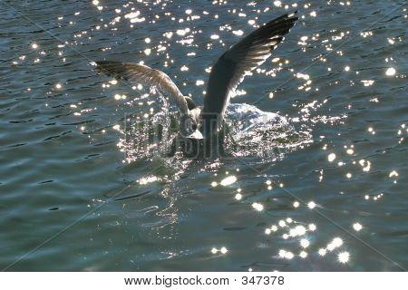 Brid Landing In Water