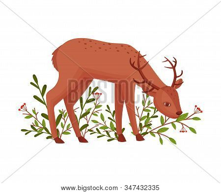 Brown Deer Near Floral Twigs. Hoofed Ruminant Mammal Standing With Its Head Bending Vector Illustrat
