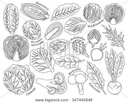 Cabbage Of Lettuce Vector Outline, Line Set Icon.vector Illustration Set Vegetable Food. Isolated Ou