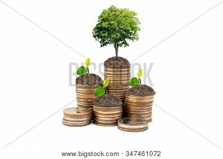 Business Growth Concept : Green Tree And Sprout Tree Growing On Stacked Of Silver Coins Isolated On