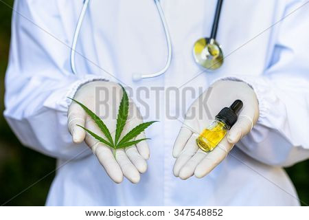 Cbd Hemp Oil. Cannabis Leaves Are In Both Hands, Researchers Or Doctors. Alternative Medicine Concep