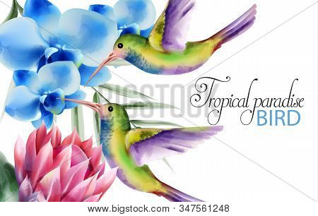 Watercolor Tropical Paradise Birds With Colorful Feathers