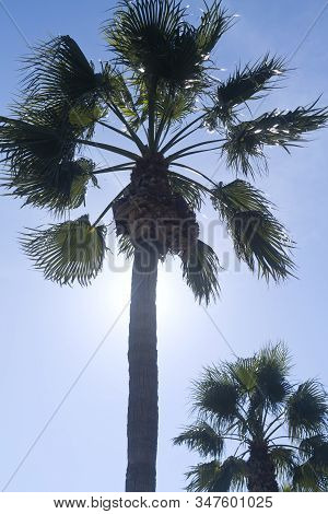 Two Palm Trees In Front Of The Light Blue Sky In Sunlight, Back Lit