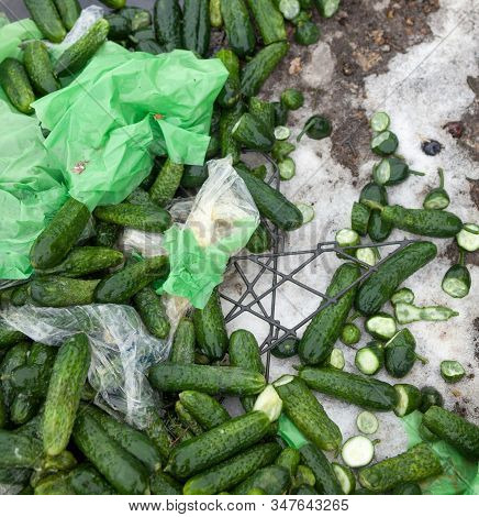 Piles Of Cucumbers On The Landfill. Spoilt Rotten Vegetables. Close-up.