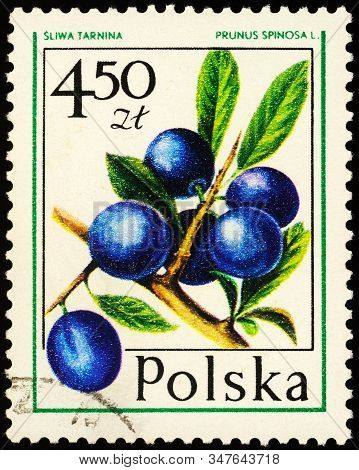 Moscow, Russia - January 26, 2020: Stamp Printed In Poland Shows Branch Of Blackthorn Or Sloe (prunu