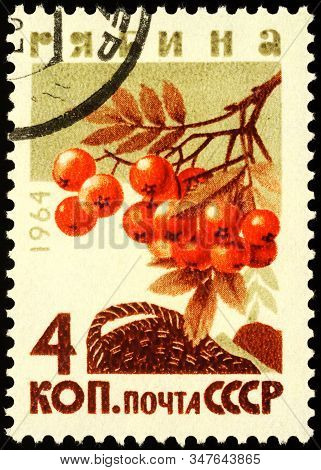 Moscow, Russia - January 27, 2020: Stamp Printed In Ussr (russia) Shows Ashberries, Or Rowan-berries