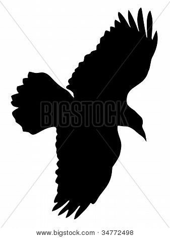 silhouette of raven