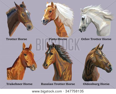 Set Of Realistic Portraits Of Horses Breeds (russian Trotter Horse; Welsh Pony; Oldenburg Horse; Pin