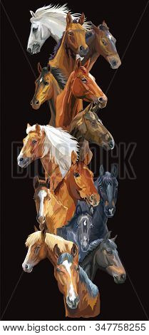 Vertical Postcard With Horses. Colorful Vector Realistic Portraits Of Horses. Big Group Of Horses Is