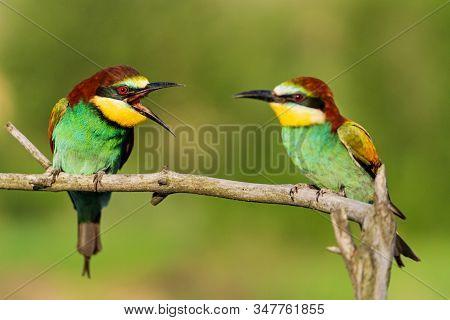 Birds Of Paradise Swear Sitting On A Branch