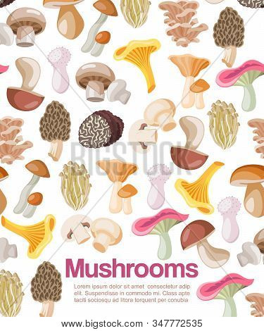 Mushrooms Edible Organic Vegeterian Mushrooming Poster Vector Illustration. Cartoon Champignon And B