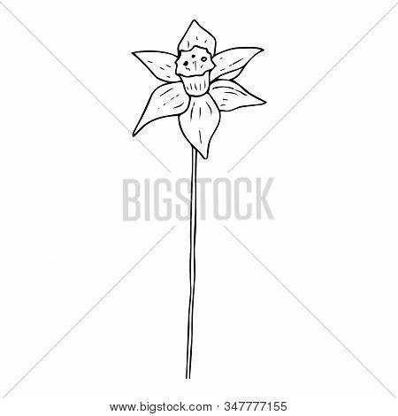 Daffodil Flower Icon. Vector Illustration Of Spring Daffodil. Hand Drawn Daffodil Spring Flower.