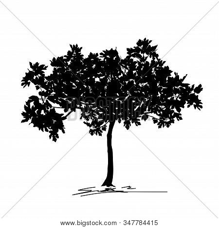 Silhouette Of Young Tree Fig (ficus Carica L.) With Leaf, Black Vector Image On White Background