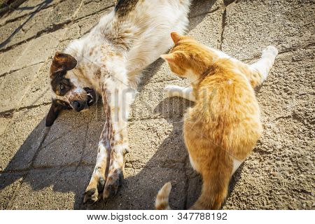 Dog And Cat Play In The Yard On A Sunny Day In Winter. Friendship Between Puppy And Kitten. Cat And