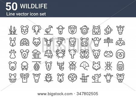 Set Of 50 Wildlife Icons. Outline Thin Line Icons Such As Tiger, Boar, Bear, Pawprints, Rabbit, Pand