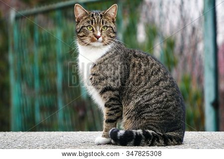 A Gray Striped Cat With A White Breast And Green Eyes Sits On The Asphalt And Looks Intently At The