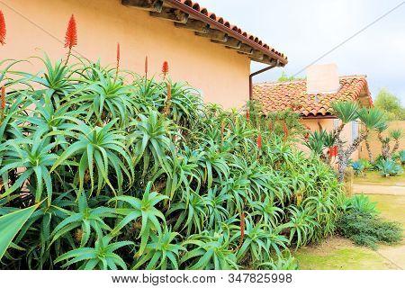 Aloe Vera Plant Flower Blossoms Besides A Historic Adobe Pueblo Hacienda Taken At A Courtyard In A G