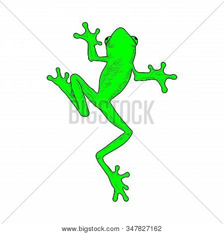 Frog Icon In Trendy Design Style. Frog Icon Isolated On White Background. Frog Vector Icon Simple An