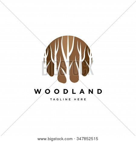Wood Symbol Logo Illustration Vector Template.forest Tree Logo