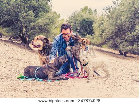 Professional Dog Walker Having Fun And Caring For His Customers A Pack Of Cute Dogs