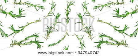 Wide Background With Pattern Of Green Rosemary Sprigs On White. Natural Fresh Herbs Flat Lay. Food C