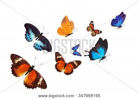 Flock Of Tropical  Butterflies Isolated On A White Background