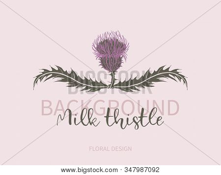 Arrangement Of Milk Thistle Flower With Leaves On Pink Background. Symbol Of Scotland, Logo.