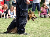 Demonstration performance of a police dog on detection of drugs and explosives on the public action poster