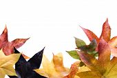 Photo of Autumn leaves over white background. poster
