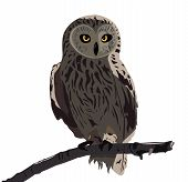 The image of the owl sitting on a branch poster