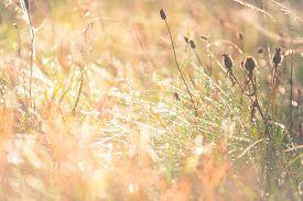 Green Grass Under Rays Of Sun. Summer Background Of Green Grass And Sun Rays. The Rays Of The Sun Fa