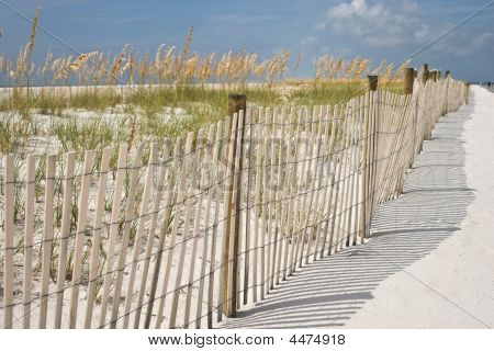 Sea Oats At The Beach